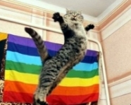 Archives radio Chroniques Top 5 des Chats' Gay